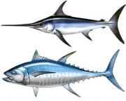 tuna_swordfish_m